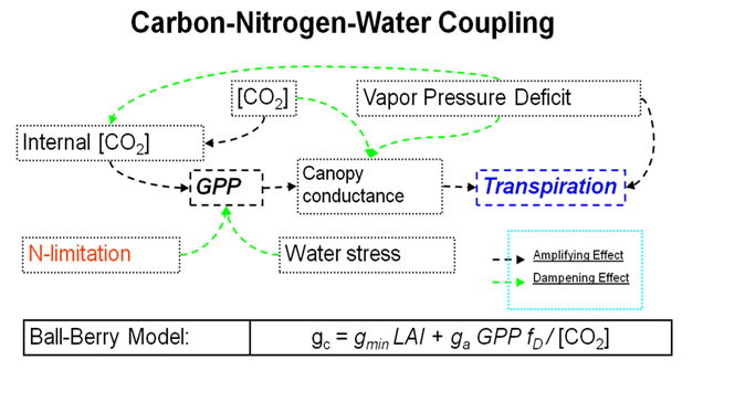 parts of the water cycle carbon nitrogen and hydrologic cycles The water cycle, the carbon cycle, the nitrogen cycle and the atmosphere.