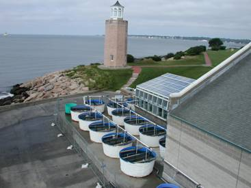 Photograph of the mesocosm facility housed on UCONN's Avery Point Campus, Groton, CT.