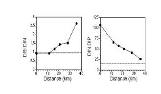 Molar Ratios of DSi:DIN, and DIN:DIP With Distance From the Caernarvon Structure During the Spring Pulse of 2001. Horizontal dashed lines indicate the Redfield ratio. Distance was determined as a straight-line from the structure to the respective sampling stations.