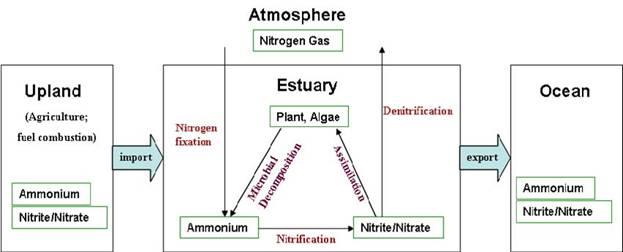 conceptual diagram of nitrogen cycling in coastal regions