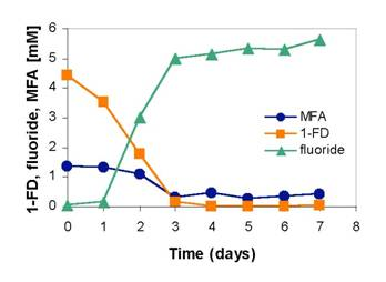 Degradation of 1-FD and MFA by Pseudomonas sp. Strain 273