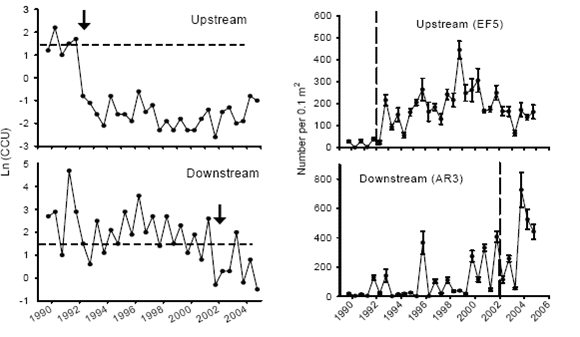 Figure 2. Long-term (1989-2004) Changes in Metal Concentrations (left panels) and Abundance of Mayflies (right panels) at Upstream and Downstream Stations in the Arkansas River, Colorado.